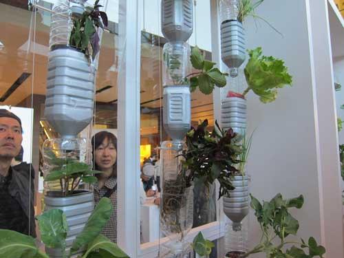 Cultivando tus propias verduras en casa