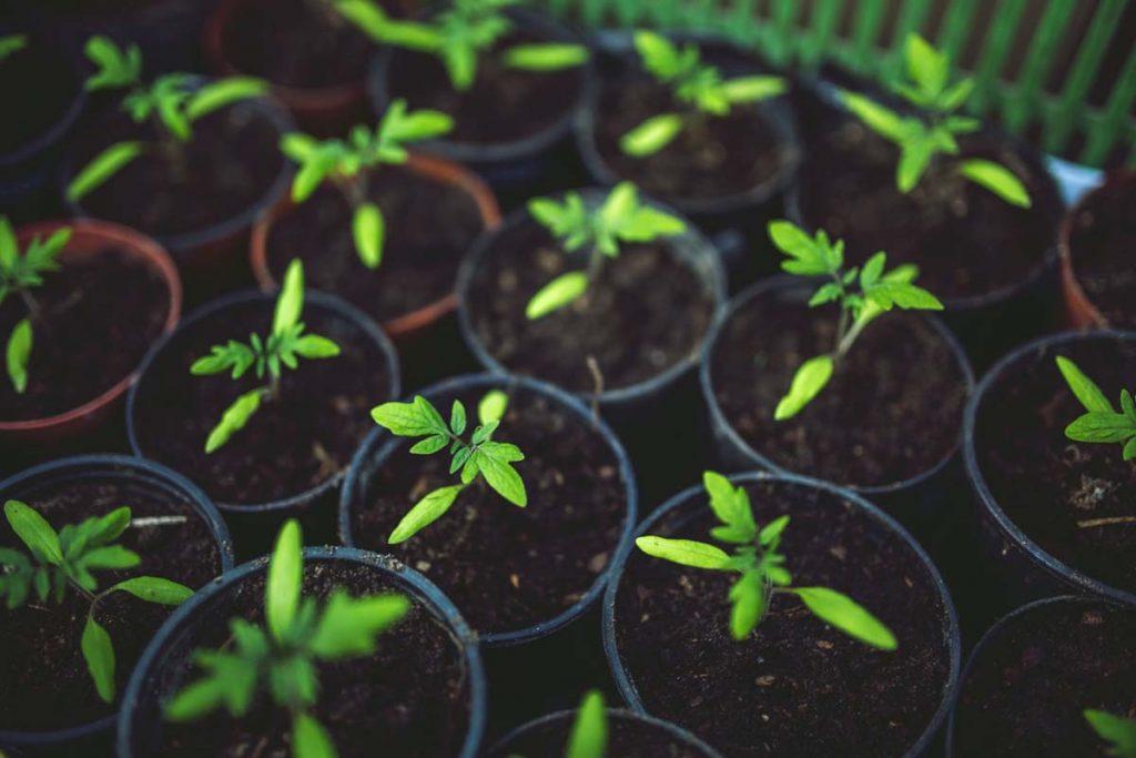 Ideas para jardines: prepáralos para el buen tiempo