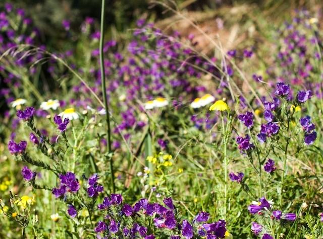 Ya es primavera: #daelpaso a disfrutarla… ¡pañuelo en mano!